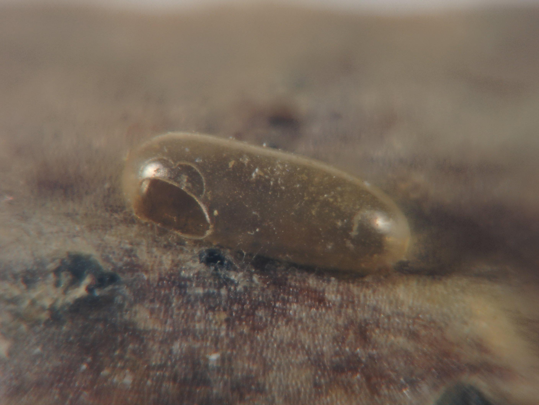 fig.5-egg-shell