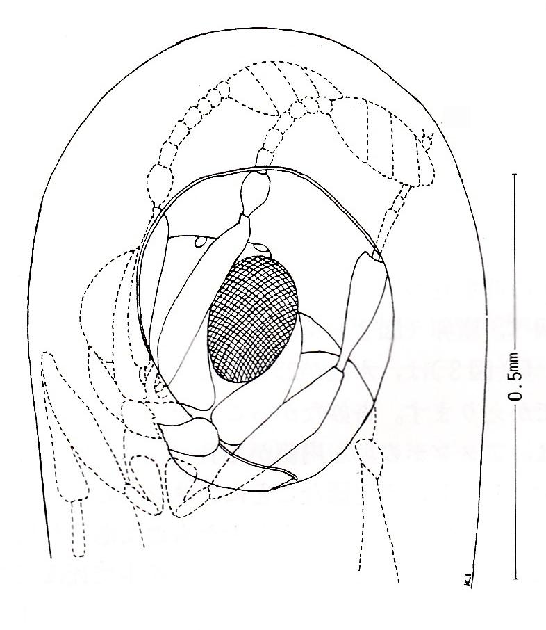 fig.9-hatch-ill