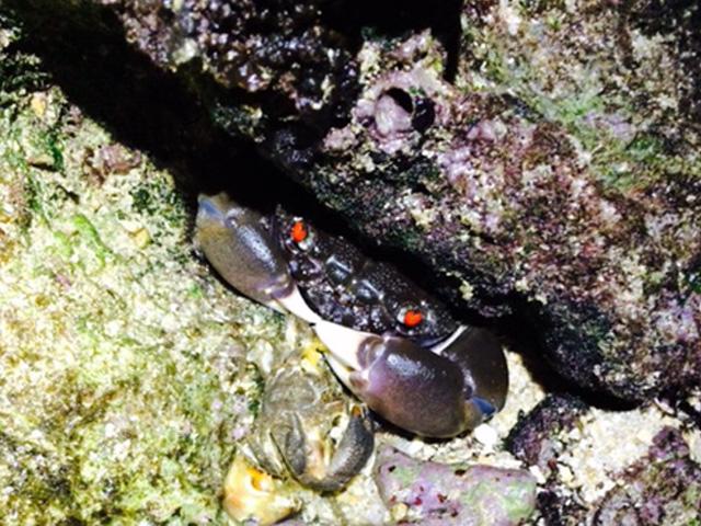 沖縄・生物夜間採集レポート〜闇夜の海で繰り広げられる生き物達の輝かしい営み〜(生物ライター)