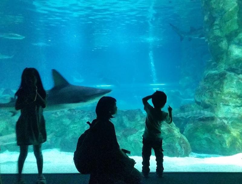 下調べから楽しむべし!常連ファミリーが実践する「子連れ水族館」攻略法(育児ライター)